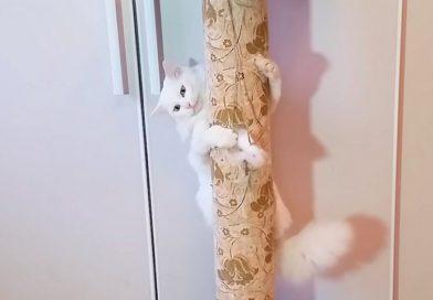 Как сделать кошачью точилку для когтей